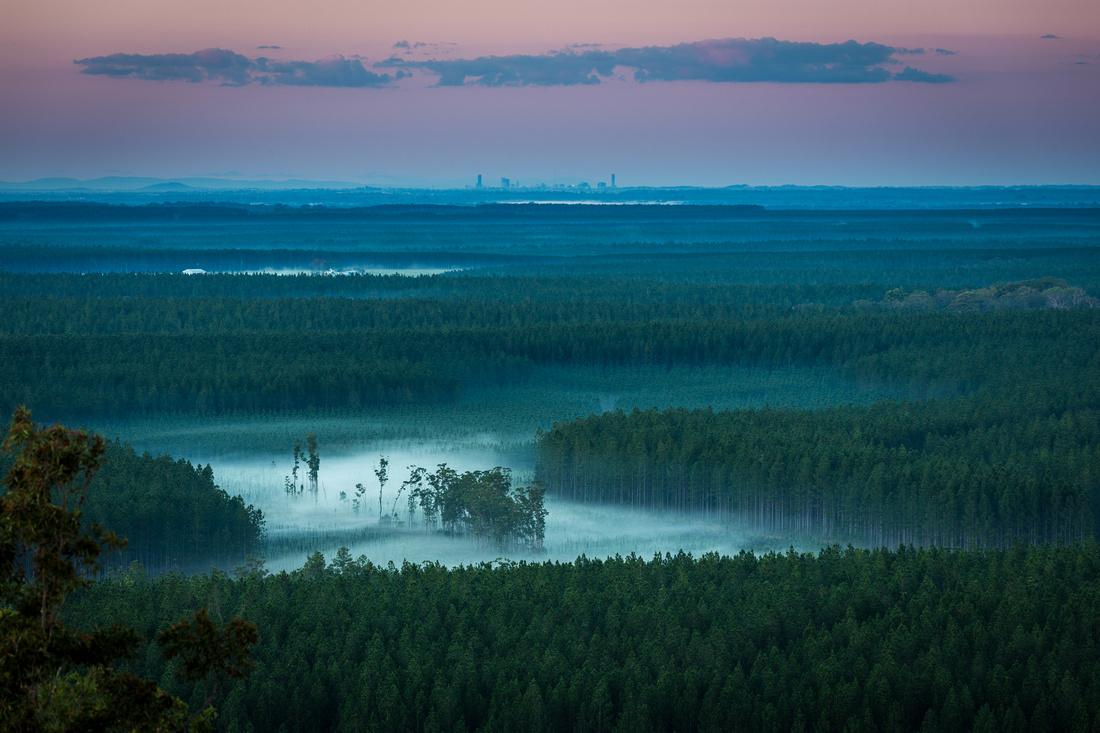 Fog through the Pines